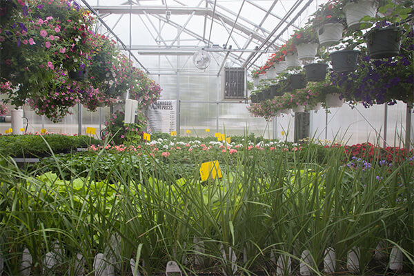 utah state hospital greenhouse